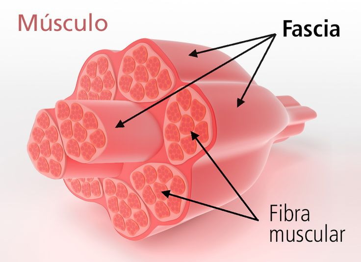 Uno de los temas que más me gusta presentar es la fascia, justamente porque es una parte de nuestra anatomía que es muy importante para el yoga. En este artículo os explico en términos sencillos qué es la fascia y