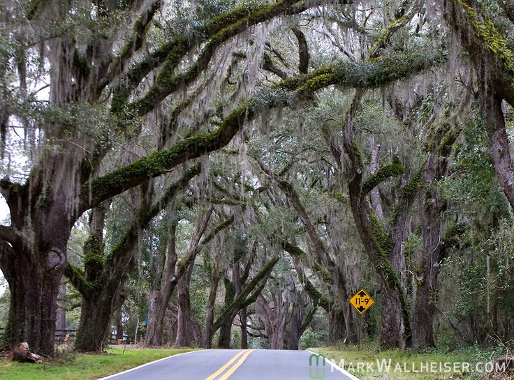 Canopy on Miccosukee Road- Tallahassee Florida & 184 best Florida State University - Go Noles images on Pinterest ...