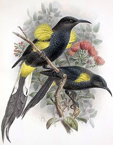 List of recently extinct birds - Wikipedia, the free encyclopedia