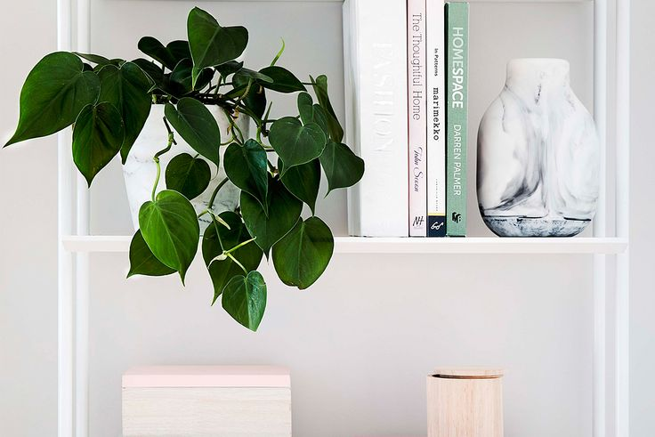10 ways to decorate with plants on shelves
