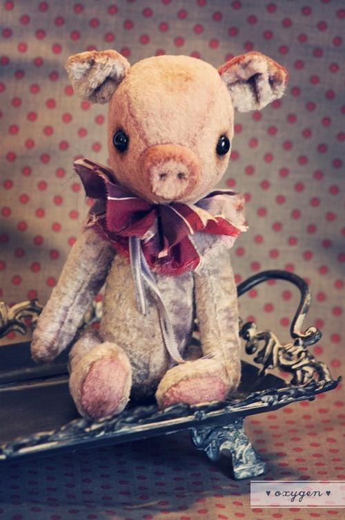 piggy @ Dani ....isn't he cute!Dani Isnt