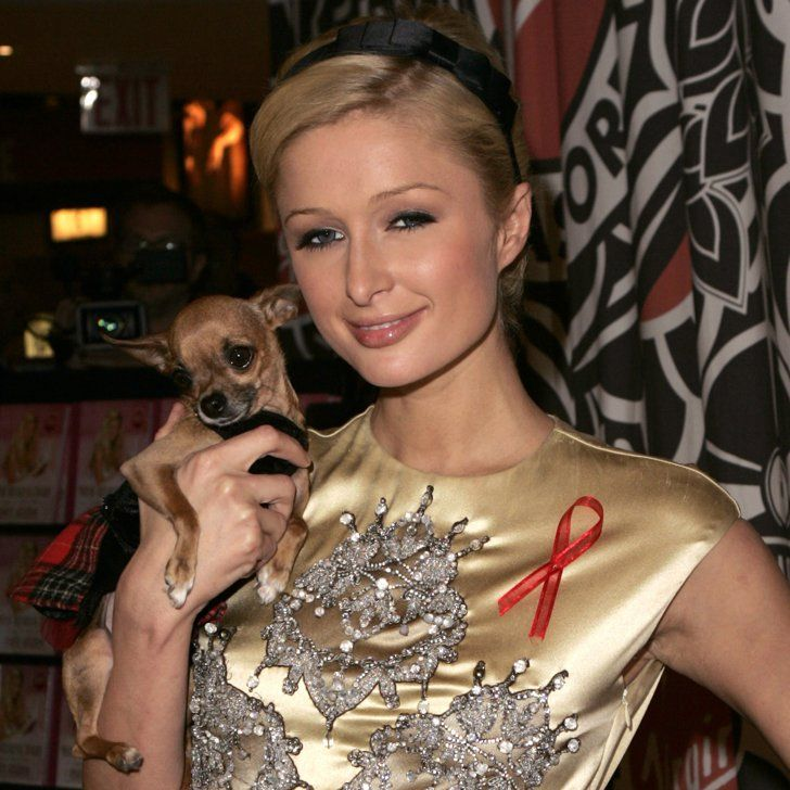 Pin for Later: Paris Hilton Shares Heartfelt Messages and Pictures After Her Dog Dies