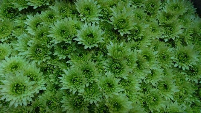 Spray green