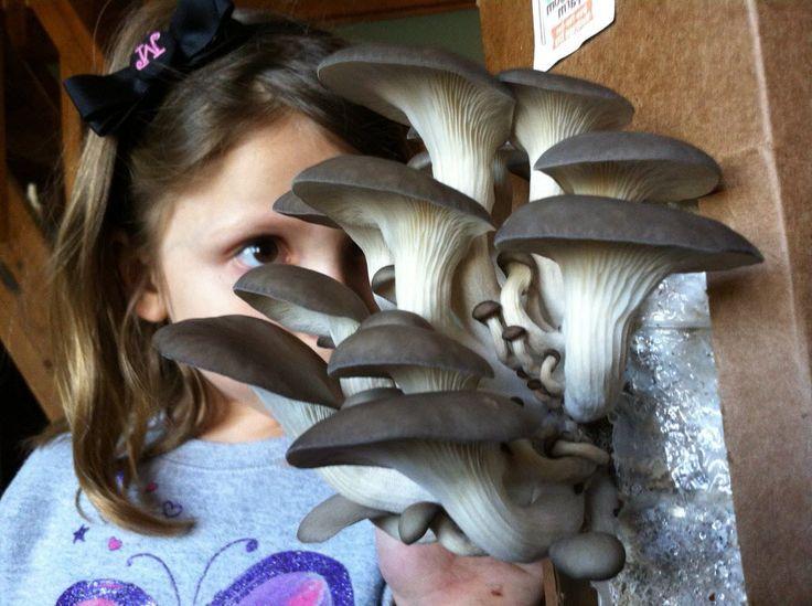 cultiver des champignons dans une boite en kit la maison les enfants adores et tout le monde se rgale avec la rcolte - Champignon Qui Detruit Les Maisons