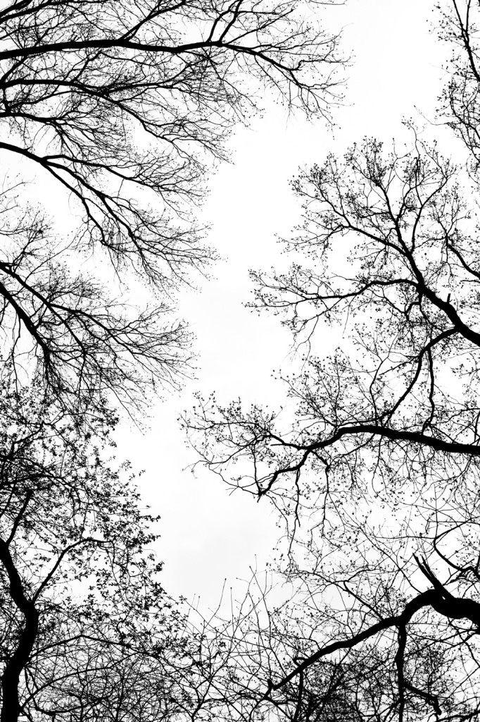 Billy Kidd .trees
