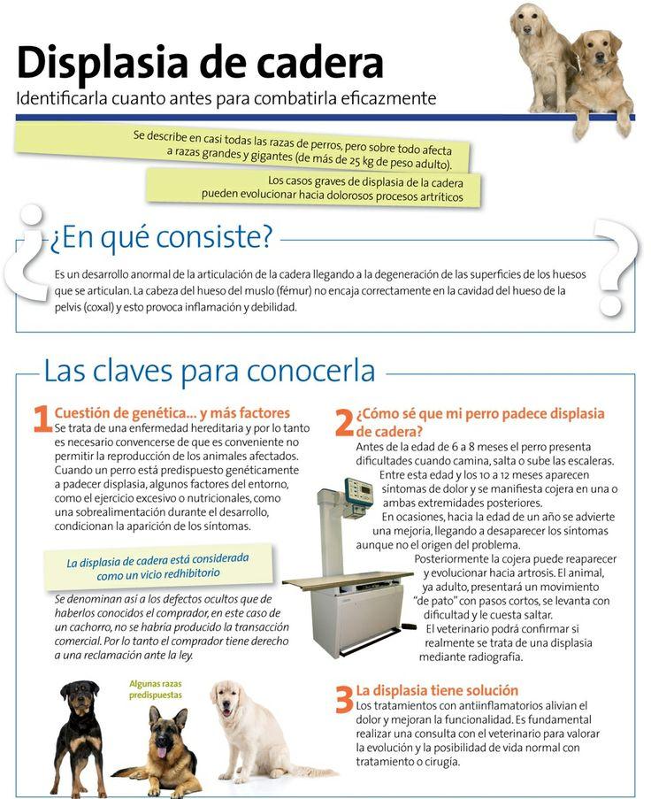 La #displasia de cadera en perros