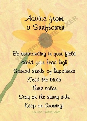 Advice from a sunflower.                                                       …