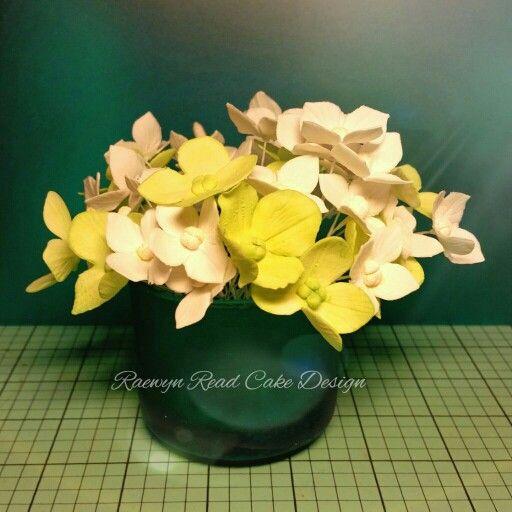 Hydrangeas  www.facebook.com/cakesbyraewyn  #sugarflowers #sugarflowerclasses