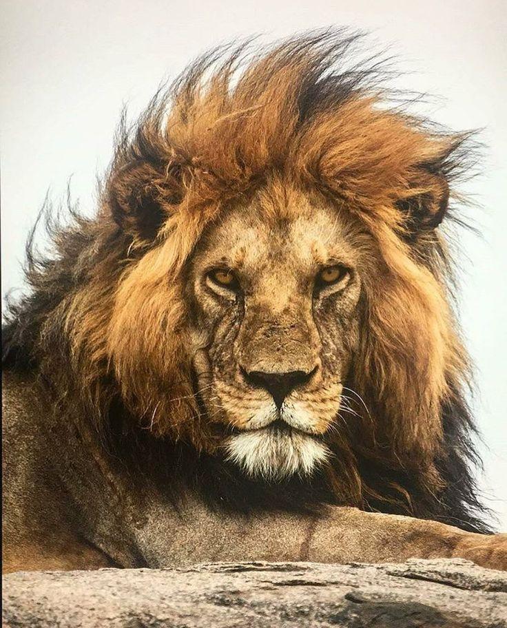 Смешные картинки львы на аватарку, машины день