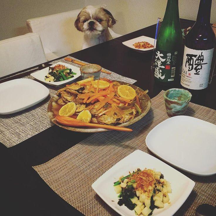 今夜の瀬戸際Maxの晩餐は前日に仕込んでおいた二日目の鯵の南蛮漬けは神とホウレン草と長芋をテキトーに麺つゆで和えて味海苔で誤魔化してみたをヤラカシたよ( ) ではでは( ω)( ω)かんぱーい #瀬戸際の晩餐 #シーズー #愛犬まゆげ by mayuge0807