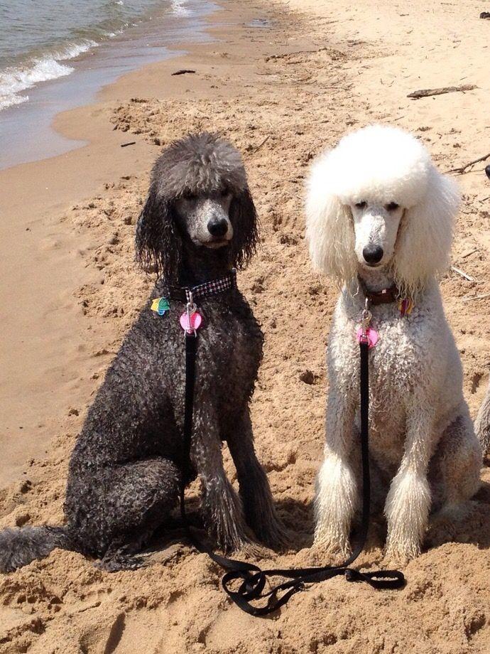 Savannah and Paris! Looks like somebody went swimming.