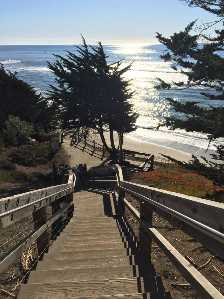 Half Moon Bay Travel Guide  Fitzgerald Marine Preserve