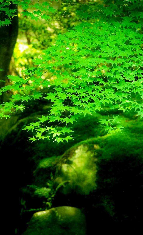 京都 瑠璃光院 Rurikouin, Kyoto, Japan #Kyoto #Green #緑