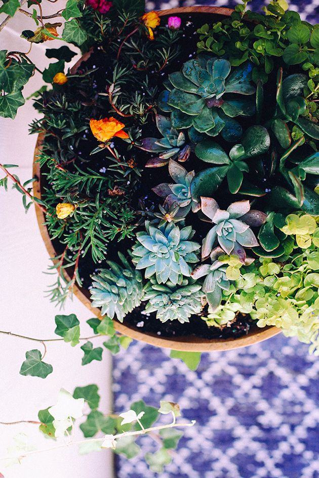 In Honor of Design's DIY Succulent Bowl from The New Bohemians