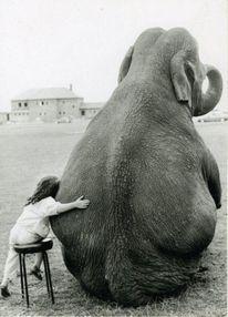 Friends!Little Girls, Heart, Best Friends, Bestfriends, Elephant, Pets, Pictures, Rolls Tide, Baby Animal