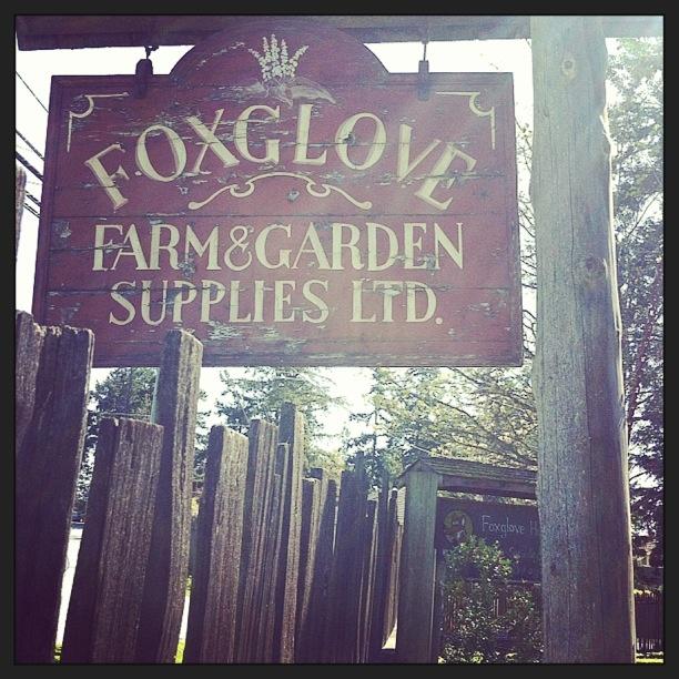 Fox Glove Farm Tour ~ Salt Spring Island