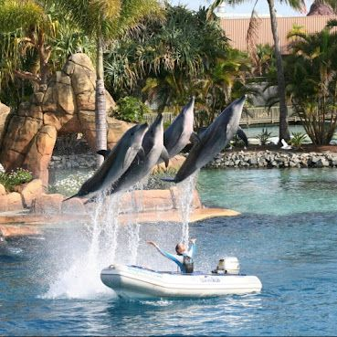 Seaworld (Gold Coast)