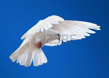 Dove in the air with wings wide open in front of the sun Stock Photo