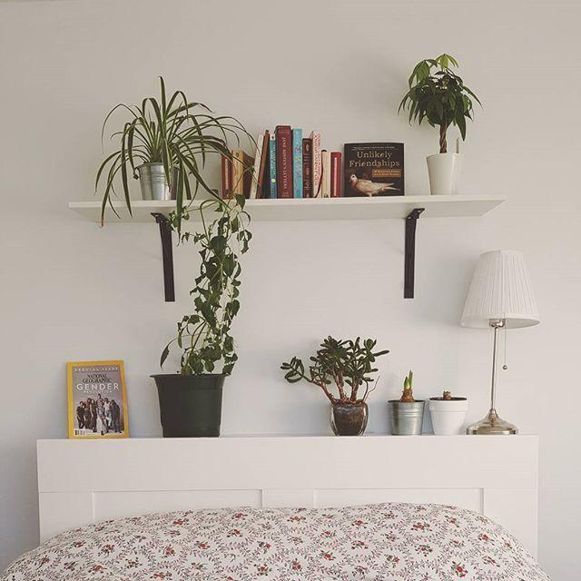 Room // mood. #bedroom #plants #books