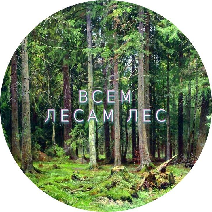 Впервые за долгие годы увидим полное собрание работ знаменитого Шишкина, хранящееся в Пермской галерее. А красота леса будет также представлена через художественные произведения, научные находки времен Пермского периода, старинные рукописи и фотографии, инсталляции и даже видео-арт.   📅 Каждый день, до 16 июля 📅 Кроме понедельников  ⏰ 12:00 - 19:00  🚩 Комсомольский проспект 4  ❣ Пермская Художественная Галерея  ☎ 212-95-24  ❗Взрослый билет: 120 рублей  ❗Дети до 18 лет: бесплатно