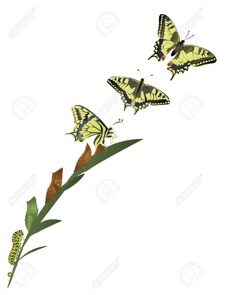 Metamorphosis Stock Vector Illustration And Royalty Free ...