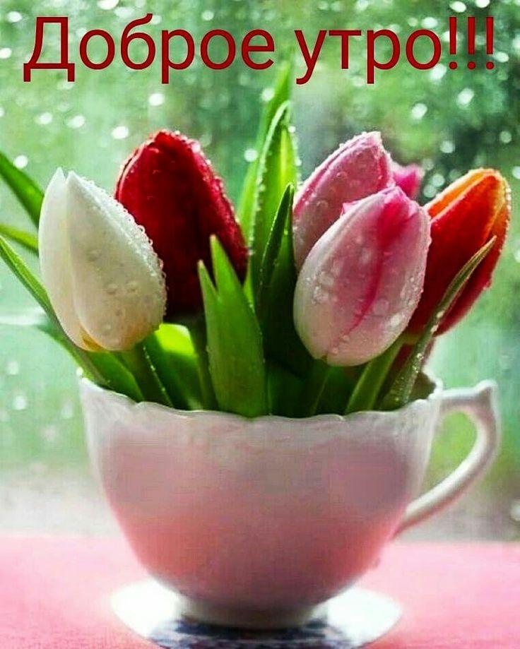 утро доброе картинка тюльпаны гиф набирает