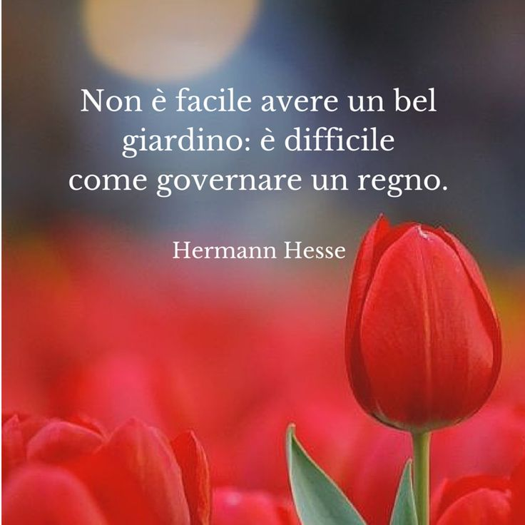 Quote by Herman Hesse #quotes #quote #aforismi #nature #natura #flowers #citazioni #naturequotes #hesse #herman #hermanhesse