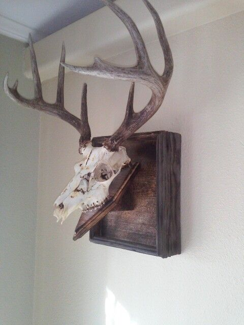 European mount out of old barn wood. Took a torch and burned the wood and skull to give it a unique look