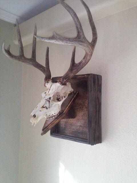19 Best Deer Images On Pinterest Deer Mounts Deer