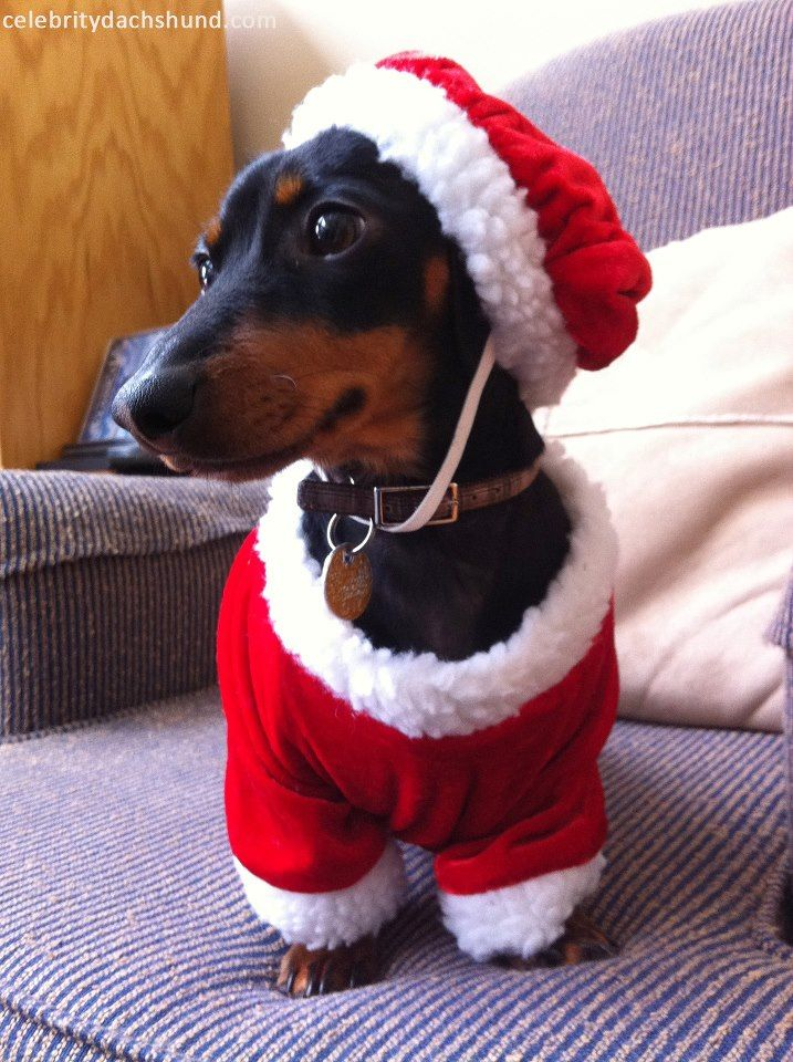 Crusoe S Christmas Clothes