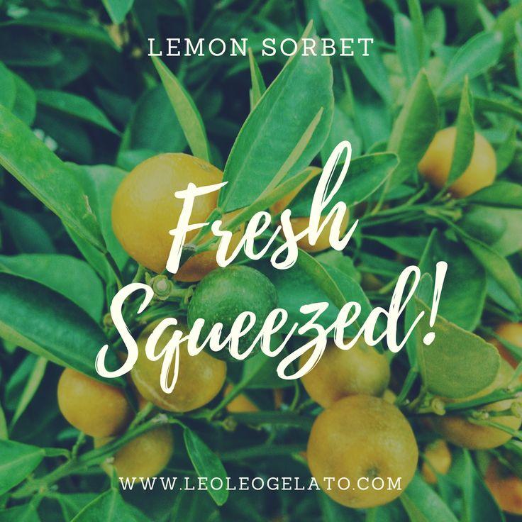 We always use fresh squeezed juices for our Lemon, Lime, Orange and Grapefruit sorbet!! It is the only way to go.  @leoleogelato   . . . .  #f52grams #feedfeed #eatclean #commontable #lifeandthyme #eeeeeats #onmytable #tastemade #forkyeah #dailycortado #yahoofood #huffposttaste #buzzfeast #instafeast #bareaders #foodandwine #onthetable #vscofood #vscocook #foodstyling #beautifulcuisines #heresmyfood #theartofslowliving #rslove #realsimple #foodporn #cntravelereats #drinkwine #leoleogelato…