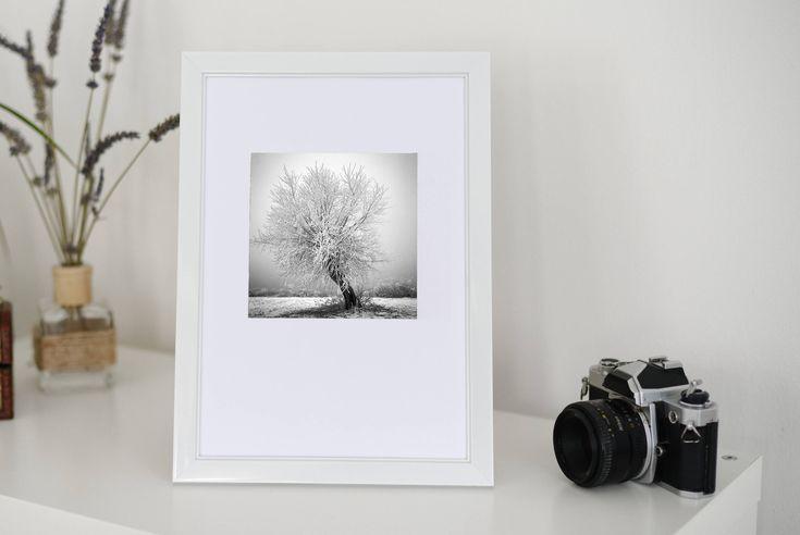 Original photography, home decor, fine art, gift, mini, Transylvania, winter snow magic tree 5x5 plus white border, limited edition of 20