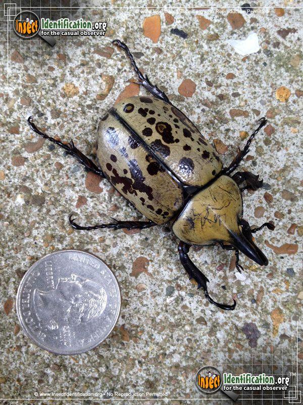 beetle bug 2 walkthrough