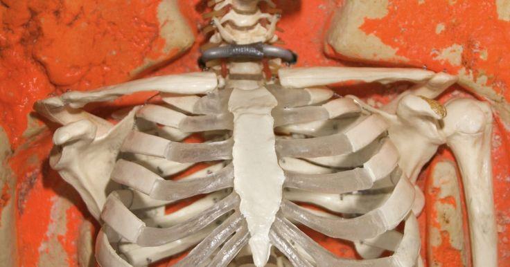 Como desenhar a estrutura de um esqueleto. Desenhar a estrutura de um esqueleto é uma maneira sábia de mostrar seu conhecimento sobre a estrutura óssea humana. Esboçar um esqueleto pode impulsionar qualquer projeto de feira de ciências, por exemplo. Além disso, você pode criar um projeto de arte desafiador com as demandas complexas do desenho. O truque de desenhar um esqueleto é completar ...
