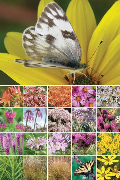 Butterfly Garden Ideas butterfly garden milkweed collection 64 Plant Butterfly Garden