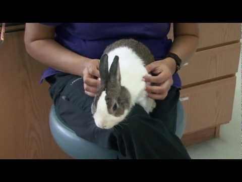 """An American Veterinary Medical Association video about small mammals, """"Pint-sized Furry Pets Make Great Companions,"""" featuring Dr. Don Staunton."""