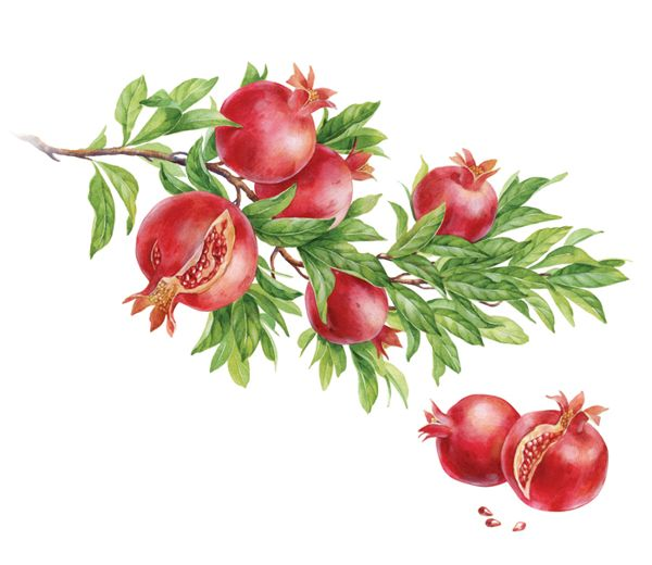 olive, pomegranate & orange by Natalia Tyulkina, via Behance