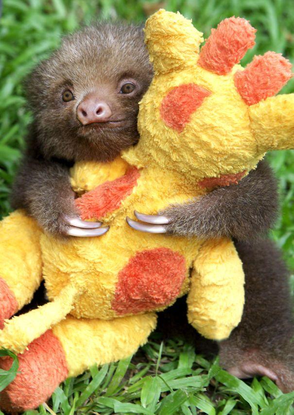Mateo And His Giraffe.  Baby 2 Toed Sloth!