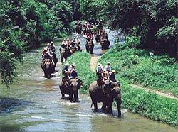 thailand elephant trekking #travel