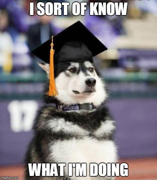 Funny Dog Meme Generator : Graduate dog meme generator imgflip be funny
