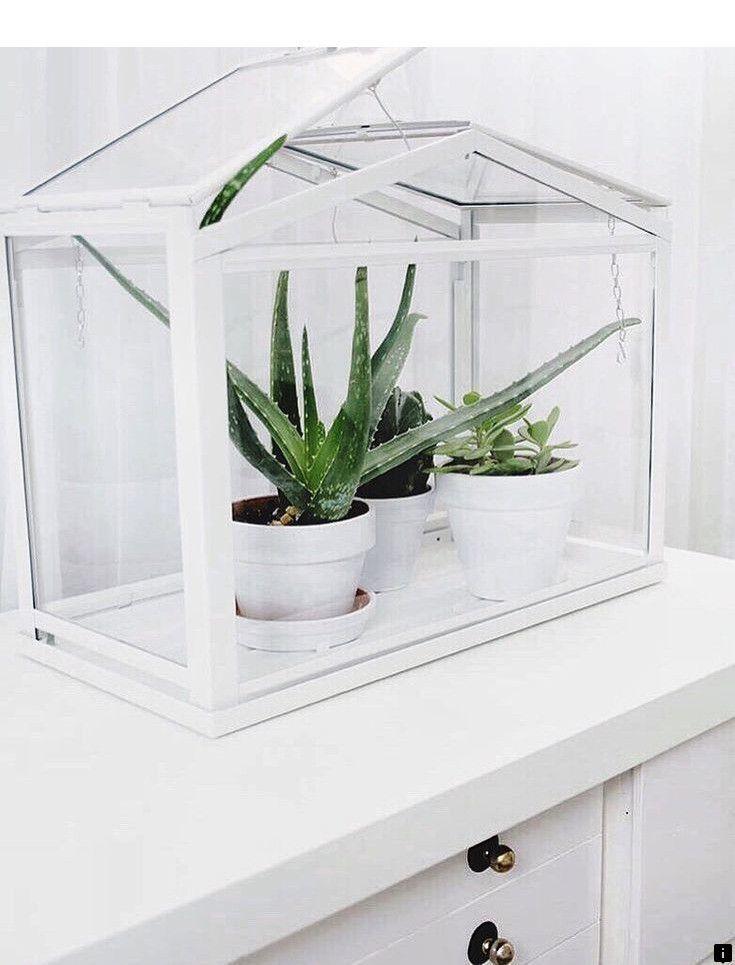 застекленная тепличка для комнатных растений фото того, лабораторные исследования