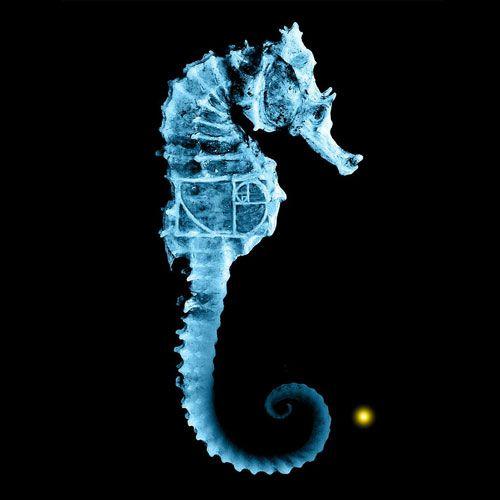 The Sea Horse and Fibonacci