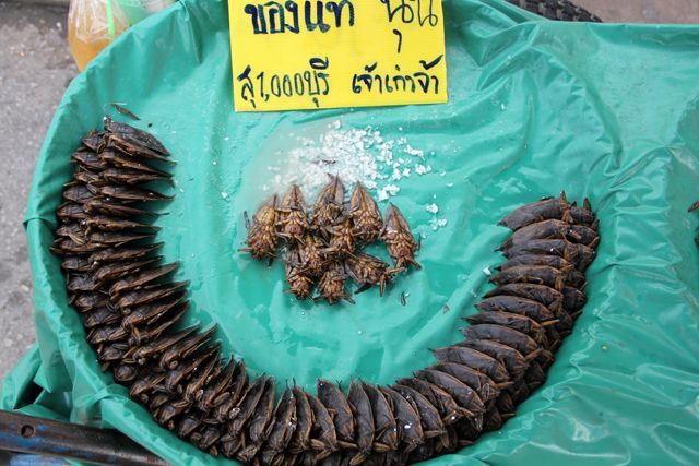 How to Eat a Giant Water Bug (Maeng Da) แมงดา