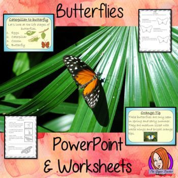 Butterflies - PowerPoint and Worksheets This download teaches children about Butterflies. There is a detailed 23 slide PowerPoint on the life cycle of butterflies, details about the transformation from caterpillar to butterfly, information about how they