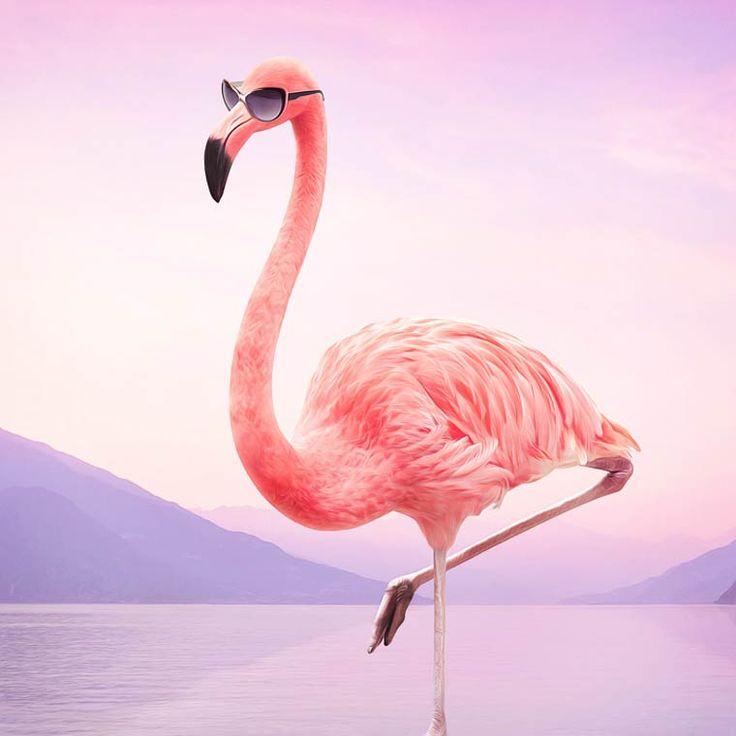 Animals – Les étranges compositions surréalistes de Murat Sayginer