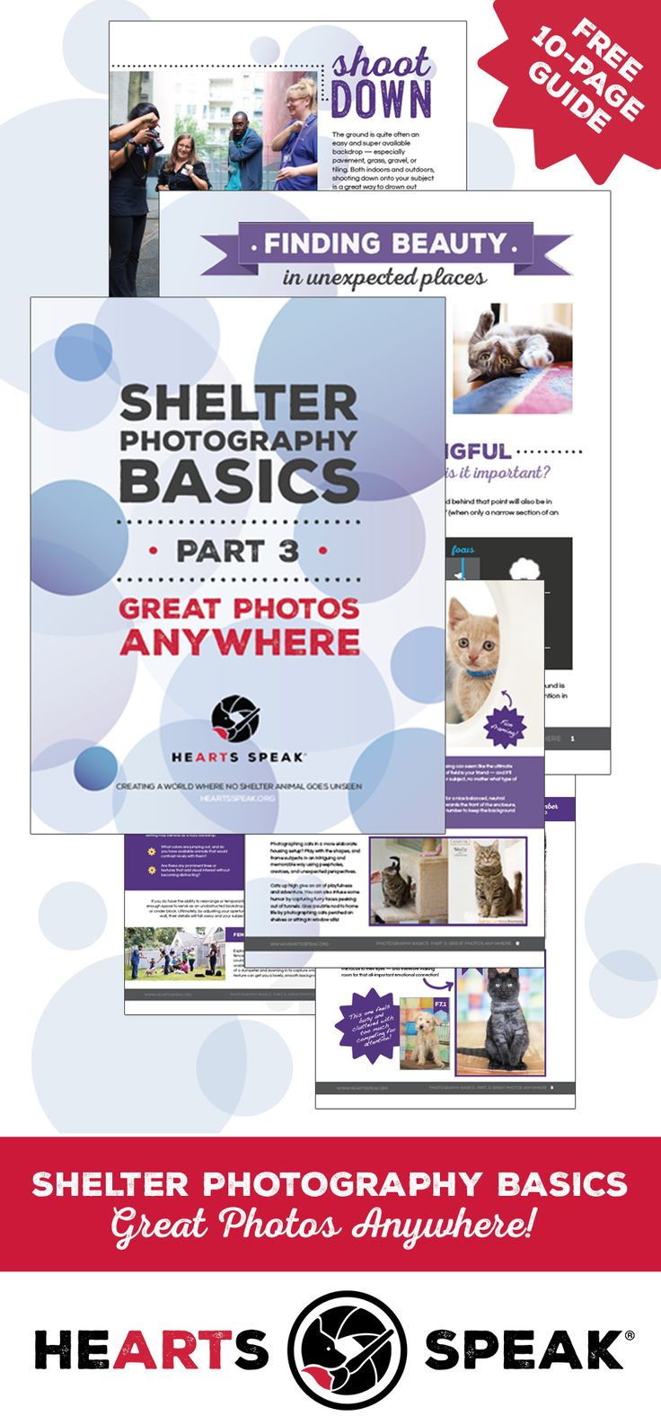 best take great pictures images on pinterest shelters animal