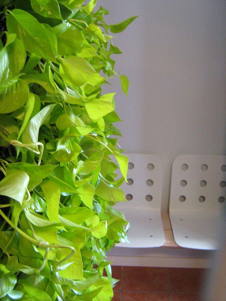 Green Walls @ Cabinet de Avocatura