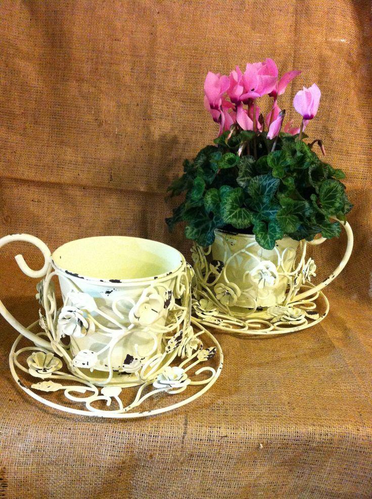 cyclamen & metal cup planters