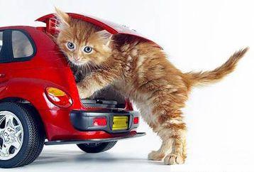 Top 10 car pet names