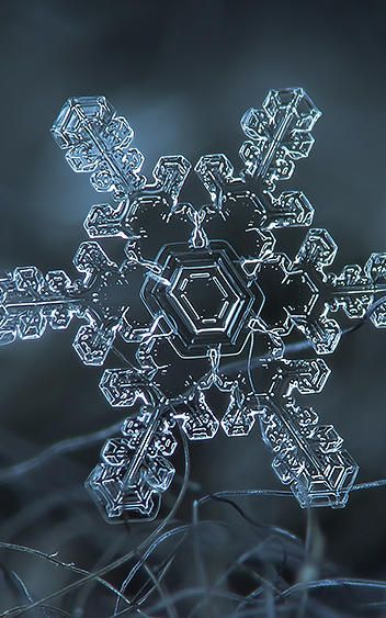 9 | Amazing Closeups Of Snowflakes Give A Little Glimpse At How Awesome Nature Is | Co.Exist | ideas + impact